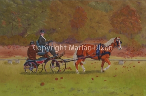 Carriage dressage at Dwellingup