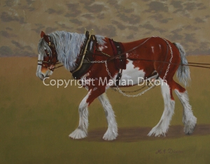Clydesdale in harness