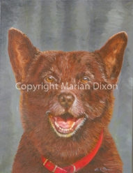 Koko a.k.a. Red Dog