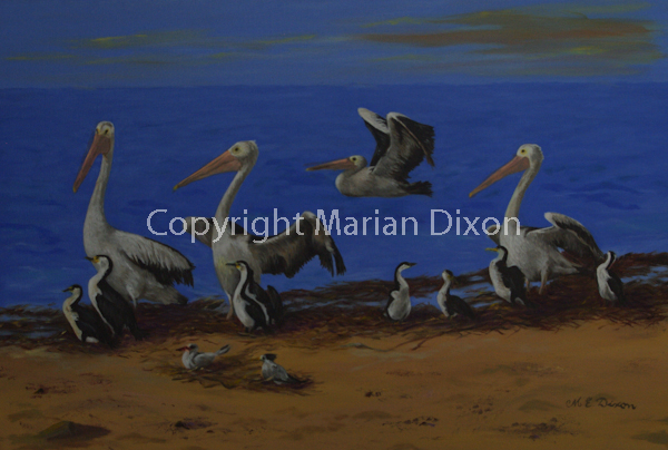 Pelicans, terns, cormorants