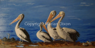 Pelicans, cormorants, terns