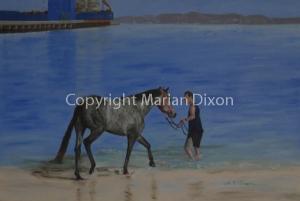 Race Horse on Kwinana Beach with Owner
