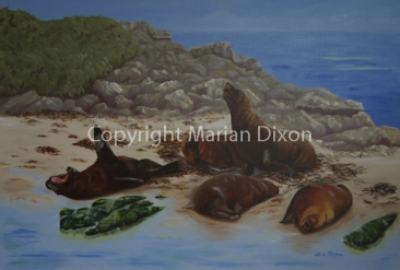 Sea Lions on Seal Island Shoalwater
