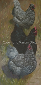Three hens