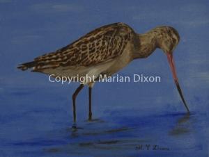 Wading bird photographed on Tern Island