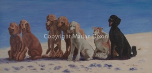 Six standard poodles and a friend sitting in a row on beach
