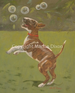 Brindle Miniature Bull Terrier chasing bubbles