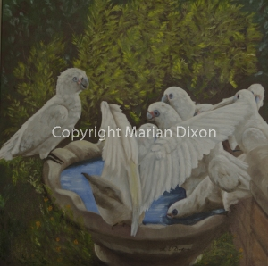Corellas in a bird bath