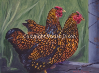 Two Golden Laced Wyandotte hens