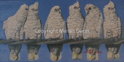 Six corellas on power line