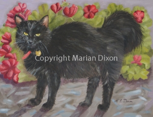 Black Domestic Long Haired cat