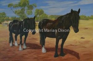 Two Shire horses at York farm