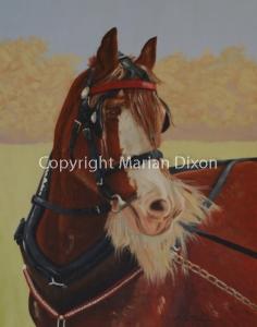 Clydesdale Portrait