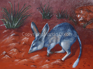 Bilby at Kanyana Wildlife Park