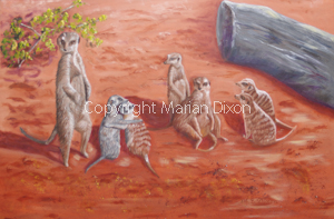 Group of meerkats at Perth Zoo
