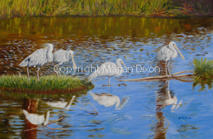 Spoonbills on pond, Seabrooke Ave, Rockingham