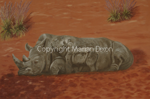 Rhinocerus and calf born at Perth Zoo