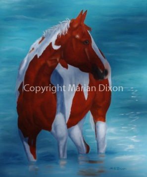 Paint horse standing in water up to knees