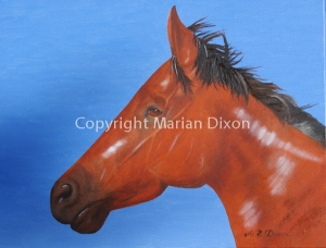 Chestnut horse head on blue background