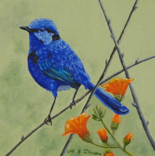 Male blue wren on a branch with orange flowers